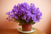 Kwiatki na biurku.